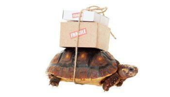 Транспортировка черепахи в самолете. Особенности и советы.