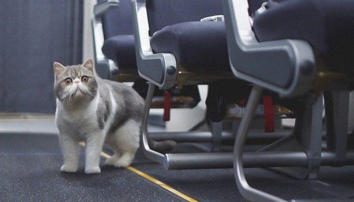 Перевозка кошки в самолете по России и за границу