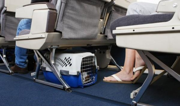 Особенности провоза различных видов багажа в авиакомпании Россия