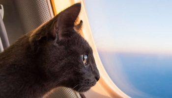 Правила перевозки домашних животных у авиакомпании «Победа»