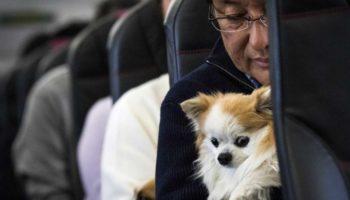 Как перевозить животных в самолёте по России и за границу