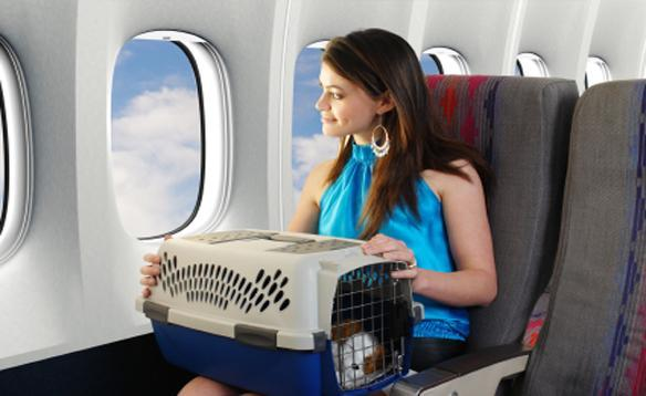 животное в самолете в переноске
